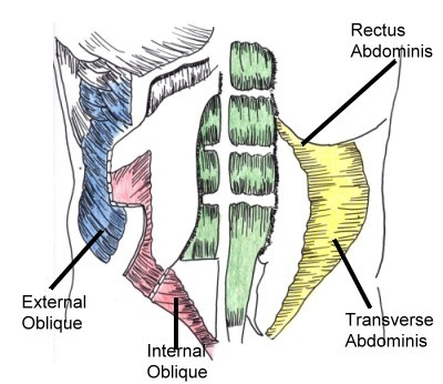 Muscles of Dee Kay