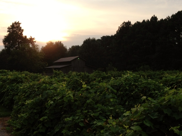plantation pics 3